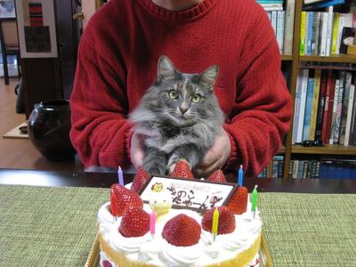 4.陛下、今日のケーキです.JPG