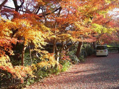 嵯峨野の紅葉20131205 (3).JPG