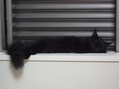 窓辺で風に当たる.JPG
