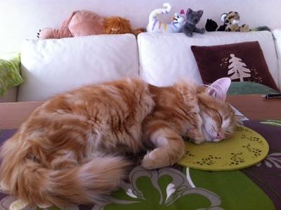 Sleeping Mon 010513.JPG